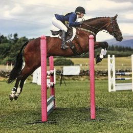 15.2 Bay Gelding by Shannondale Sarco