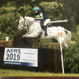 Fantastic Dressage, Eventing, Pony Club Pony – Super Talented – every mothers dream - £8k
