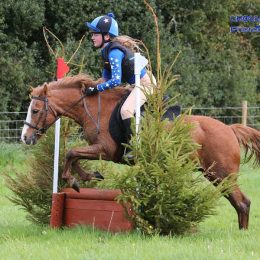 12h2 Welsh B All Round Pony for sale. Located Scottish Borders.