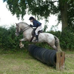 Wanted Pony Club Allrounder