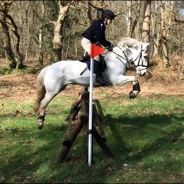 Lovely 14hh Fun All Rounder  Pony