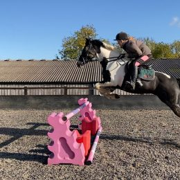 14.2 Smart talented mare
