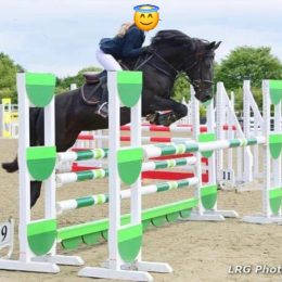 Superb Competition Pony / Beautiful Show Jumper