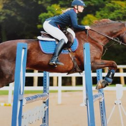 Loving home essential for this most genuine allrounder/showjumper
