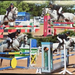 Super talented All round competition pony