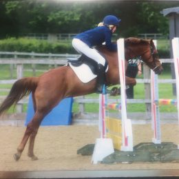 Portia 13.2 All rounder who loves to jump