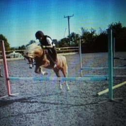 11.2hh 9 year old gelding – great competition potential