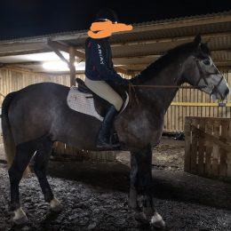First horse, jumping 1m+ for tall 14 year old (Good budget available - ignore price below)