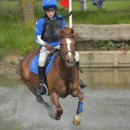 13.2hh Fantastic PC/Hunting Pony