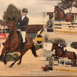 Super 148cm Bay Competition Pony