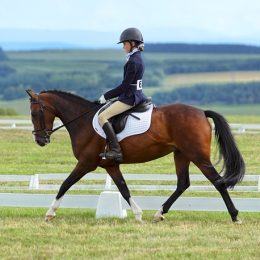 Fantastic 13.2hh New Forest Schoolmaster  - Willoway Amethyst