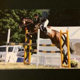 16.1 All Rounder Thoroughbred Gelding For Sale