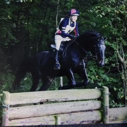 Been there & done it! 15.3hh gelding