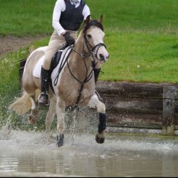Beautiful PC/ family pony, 13.2, 14 yrs, dun & white. CHAPS registered.