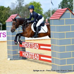Very Capable and Super Safe 12'2 Bay Gelding - enjoys all pony club activities