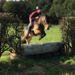 Lovely natured, competitive alrounder. 14.2 bay gelding