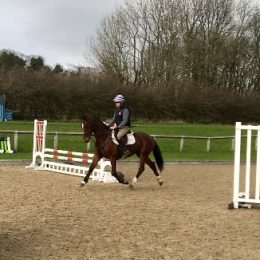 Top Quality Mare with low mileage, clean limb, athletic paces and scopey jump