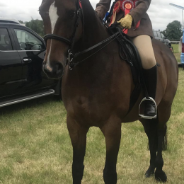 Amazing All Rounder/Eventer/ROR Showing Horse