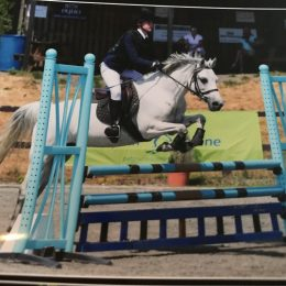 LOVELY STRAIGHTFORWARD ALLROUND JUMPING PONY