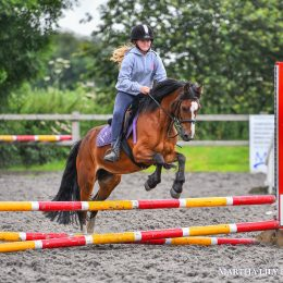 Fantastic All Rounder / Competition Pony
