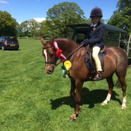13hh Welsh mountain Section B gorgeous second pony looking for loving new home