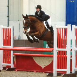 16.2HH Irish Draught X Sports Horse - Genuine Honest Gentleman