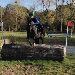 128 British Riding Pony - Fabulous allrounder with talent for Pony Club Racing
