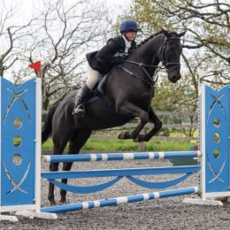 Stunning Black 16.1 TB, talented paces. Ideal non-jumping hunter