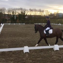 SHOWING/ WORKING HUNTER/ PONYCLUB/ COMPETITION/ HUNTER/ ALLROUNDER/MOTHER DAUGHTER SHARE