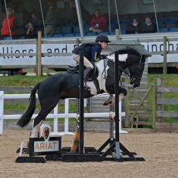 13.2 Fun all-rounder, dressage, hunting