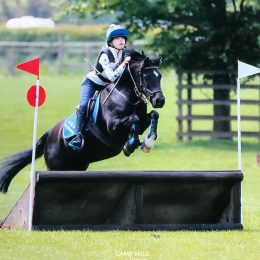 Stunning Showjumping, All Rounder and Pony Club Pony