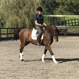 STUNNING OLDENCRAIG TRAINED DRESSAGE HORSE FOR SALE.