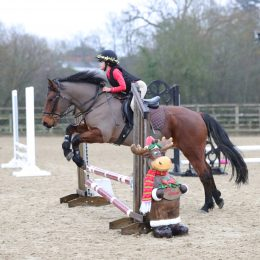Super 13.2hh 10 year old New Forest gelding, PC All-Rounder