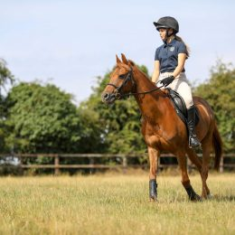 13.3hh confidence giving second pony
