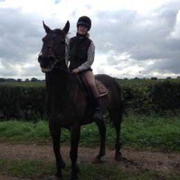 2 Horses to Loan: handsome and kind ex-racehorse and gorgeous companion