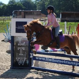 Fantastic all rounder / PC Pony- Our beautiful 12.2h chestnut mare