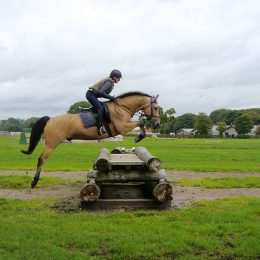 The Ultimate Allrounder! Ideal first horse! Total confidence giver!