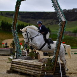Schoolmistress Showjumping or cross country
