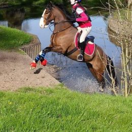 FOR LOAN 14.2HH BAY GELDING SUPER ALL ROUND PONY