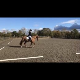 Cracking 14.2 13 year old Chestnut Mare