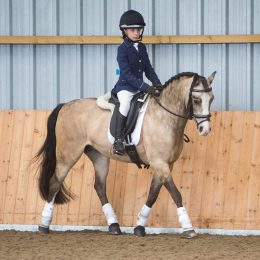 Absolute Pony Club Superstar One of the Best Dressage Flegling Ponys in the Country