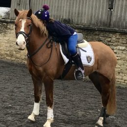 Potential Competition Pony
